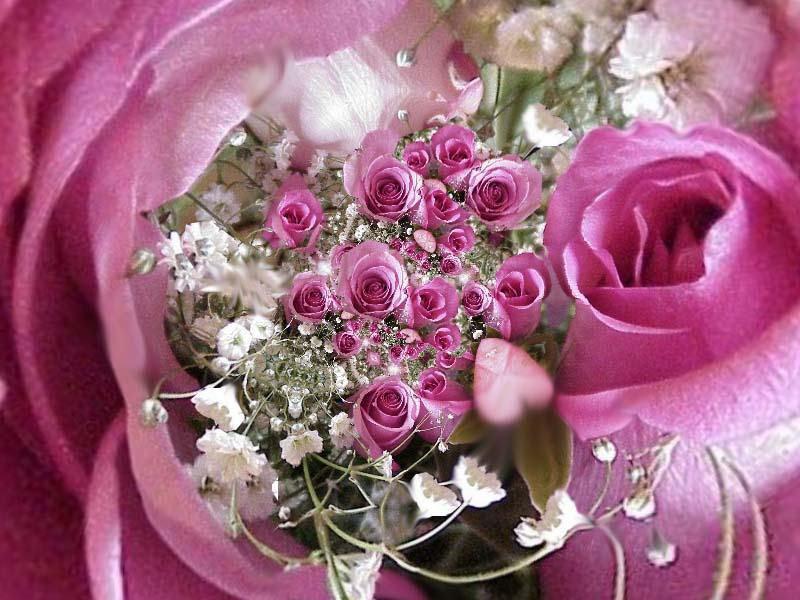 fond ecran de fleurs