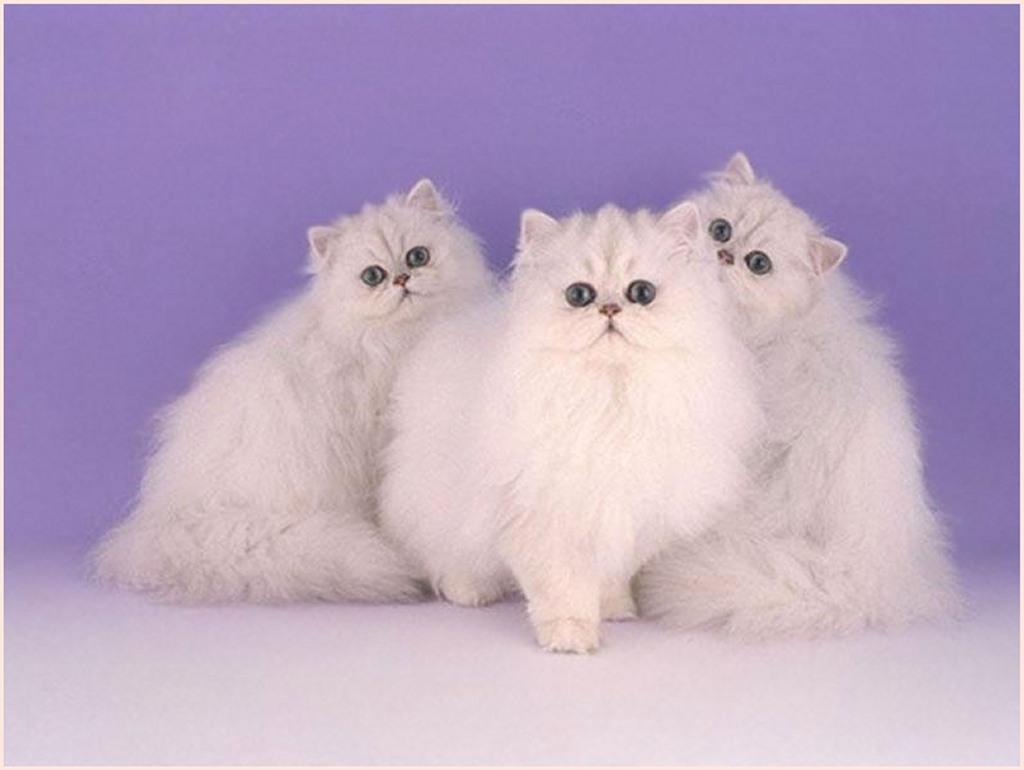 >> صور قطط << تبع المسابقه << 0gohtxz5.jpg