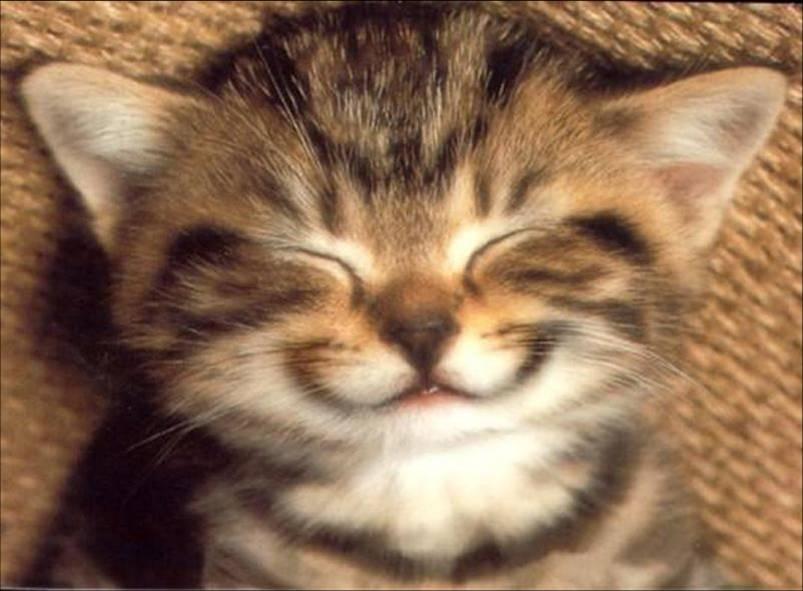 chaton qui sourie