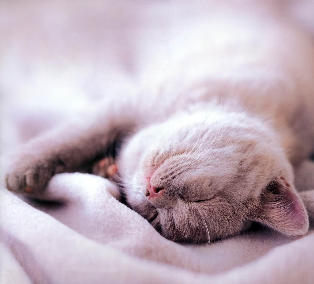 son sommeil le paradis des chats. Black Bedroom Furniture Sets. Home Design Ideas