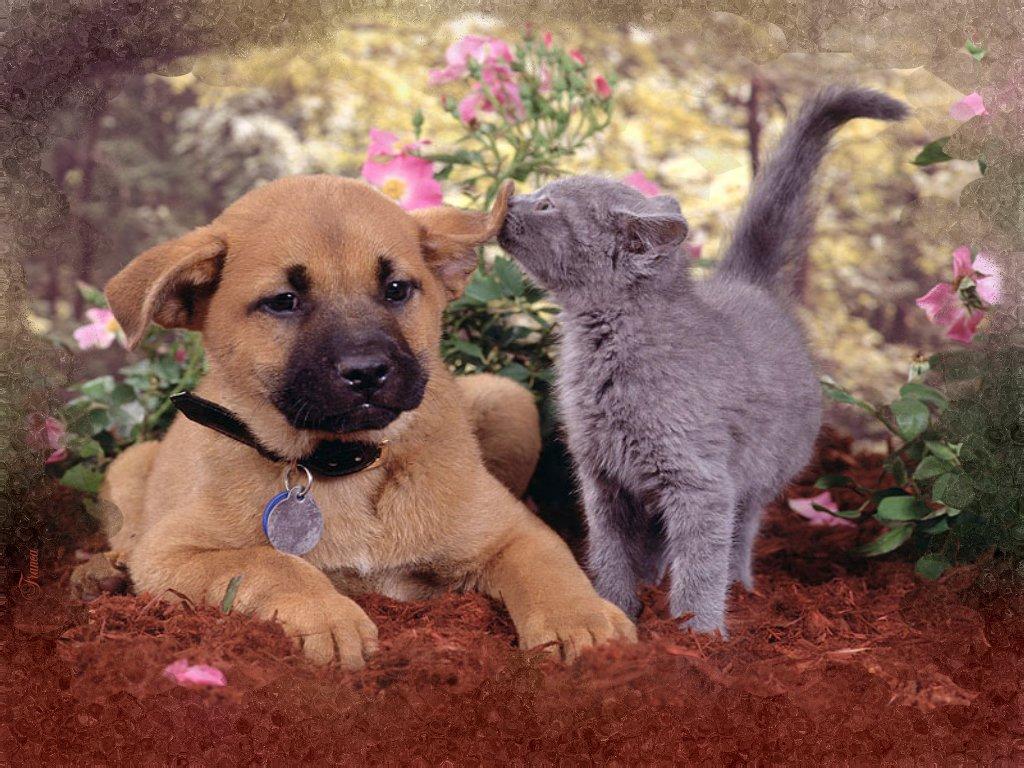 fond d'ecran gratuit chat et chien